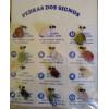 Colar Pedra Dos Signos Ref 6112 - 6 Cartelas Com 12 Unidades